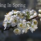 Living In Spring by Joy Watson