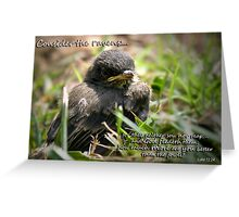 Consider the Ravens Greeting Card