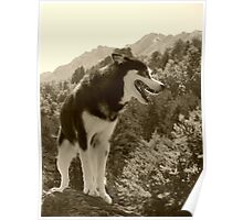 Dog on a Rock Poster