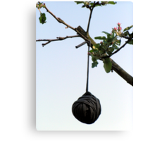 Any idea what's hanging in the tree? Canvas Print