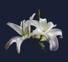 Two Delicate White Lilies by Susan Savad