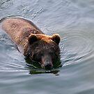 Swimming Bear by Vac1