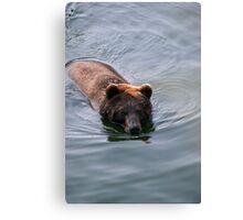 Swimming Bear Canvas Print