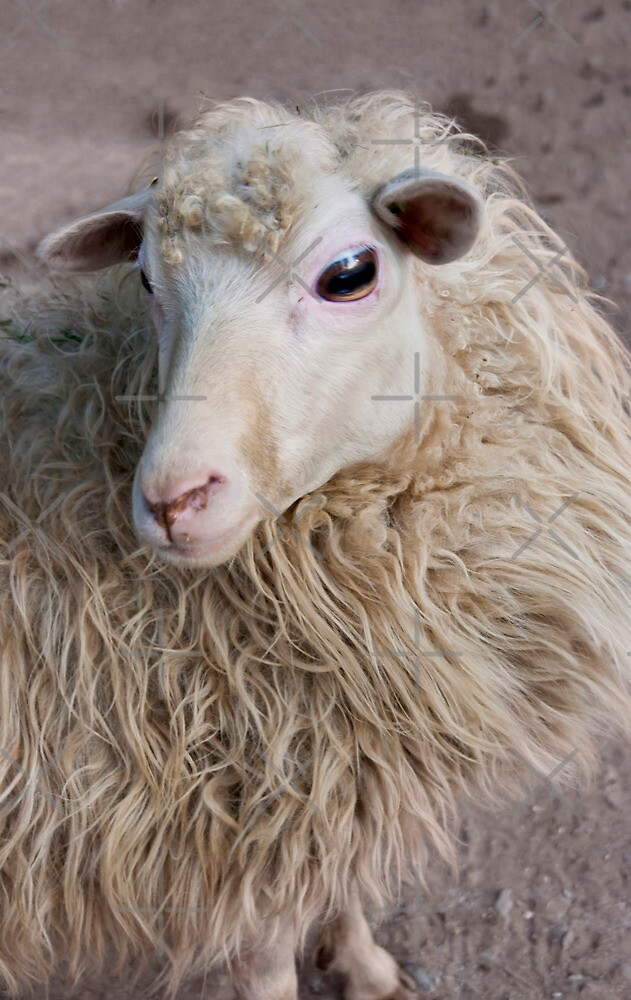 Sheep by Vac1