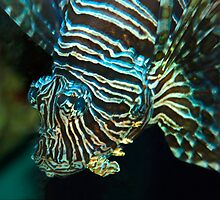 Lionfish by Vac1