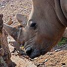 Rhinoceros by Vac1