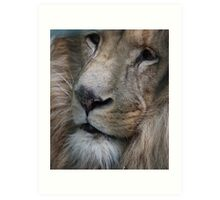 Lion King - Her Majesty  Art Print