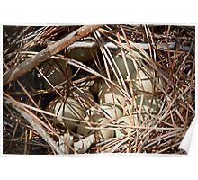 Pheasant Eggs Poster