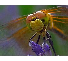 Face of a Dragon Fly Photographic Print