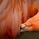 Flamingo by zzsuzsa