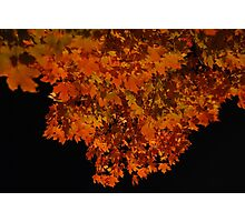 ablaze - fall leaves at night Photographic Print