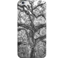 Nature: Tree Of Life iPhone Case/Skin