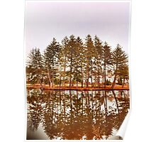 Mirror Images Of Trees Poster