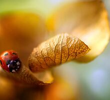 Spring lady by Mandy Disher