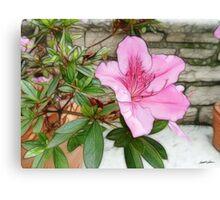 Pink Azaleas 1 Enhanced Canvas Print