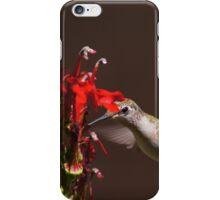 Hummingbirds Love Cardinal Flower iPhone Case/Skin