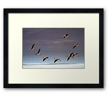 Flamingos, Atacama Desert, Chile Framed Print