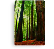 Redwoods Forest  Canvas Print