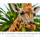 Greeted By A Giraffe : Adelaide Zoological Gardens by Nick Egglington