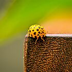 Ladybugs 2 by Alison Hill