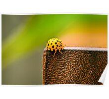 Ladybugs 2 Poster