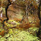 rocks, moss, roots by Glenn Browning