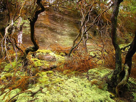rocks, moss, roots by Glenn Browning