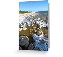 Marvel of Nature Greeting Card