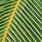 Palm frond by taryn88