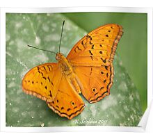 orange butterfly 2 Poster