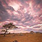 Dog Rocks  by ImagesbyDi