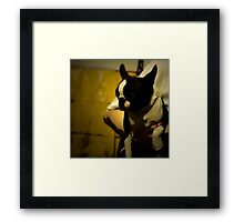 The Boston Bull Terrier  Framed Print