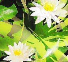 Lilypad by Mark Malinowski