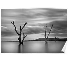 Three Dead Trees 2 - Lake Fyans The Grampians Poster