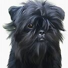 Affenpinscher by Cazzie Cathcart