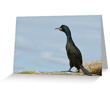 European Shag, Saltee Islands, County Wexford, Ireland Greeting Card