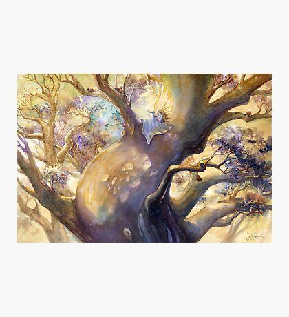 The Reading Tree Photographic Print