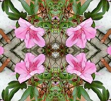 Pink Azaleas 1E kaleidoscope 3 by Christopher Johnson