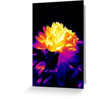 My world of colors © Greeting Card