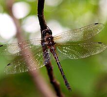 Dragonfly #1 by Elisabeth Dubois