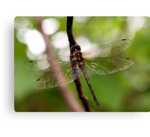 Dragonfly #1 Canvas Print