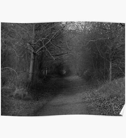 Woodlands Walks Poster