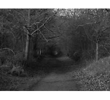 Woodlands Walks Photographic Print