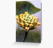 Lantana Buds Greeting Card