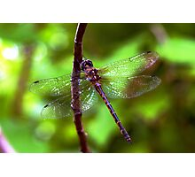 Dragonfly #2 Photographic Print