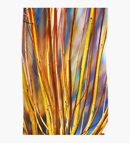 Coloured sticks Poster