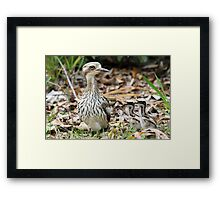 Bush-thick Knees Framed Print