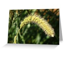 Setaria verticillata (Spike grass) Greeting Card