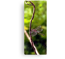 Dragonfly #3 Canvas Print