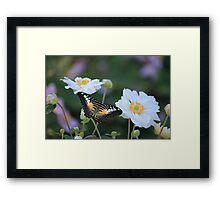 Summer Lovin  Framed Print